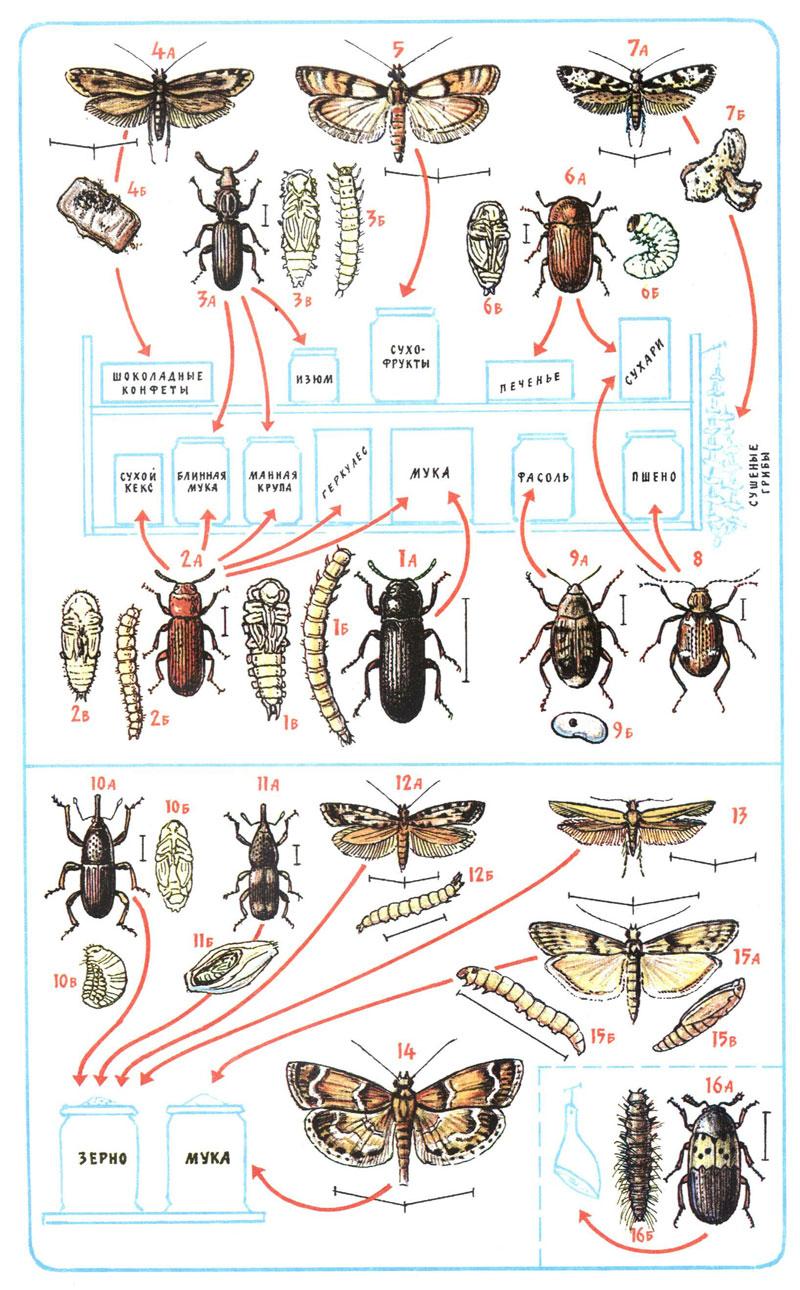домашние паразиты название и фото